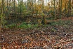 """Ein einzelner Windwurfbaum darf liegen bleiben: Beweis für die """"naturnahe Waldpflege"""" von Grün-und-Gruga."""