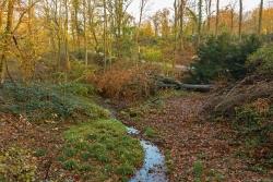 Alibi-Totholz-Baum für die Presse: Ein umgeworfener Baum darf liegen bleiben.