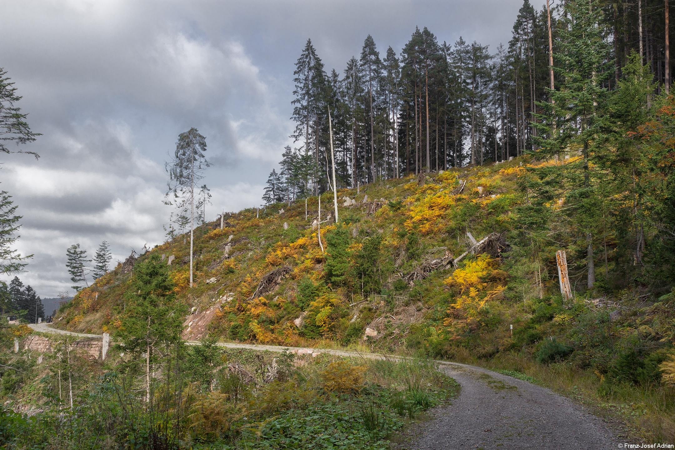 Huzenbacher_E