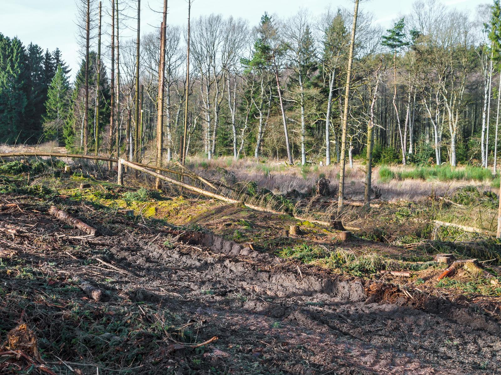 zerstörte Humusschicht und aufgerissener Mineralboden