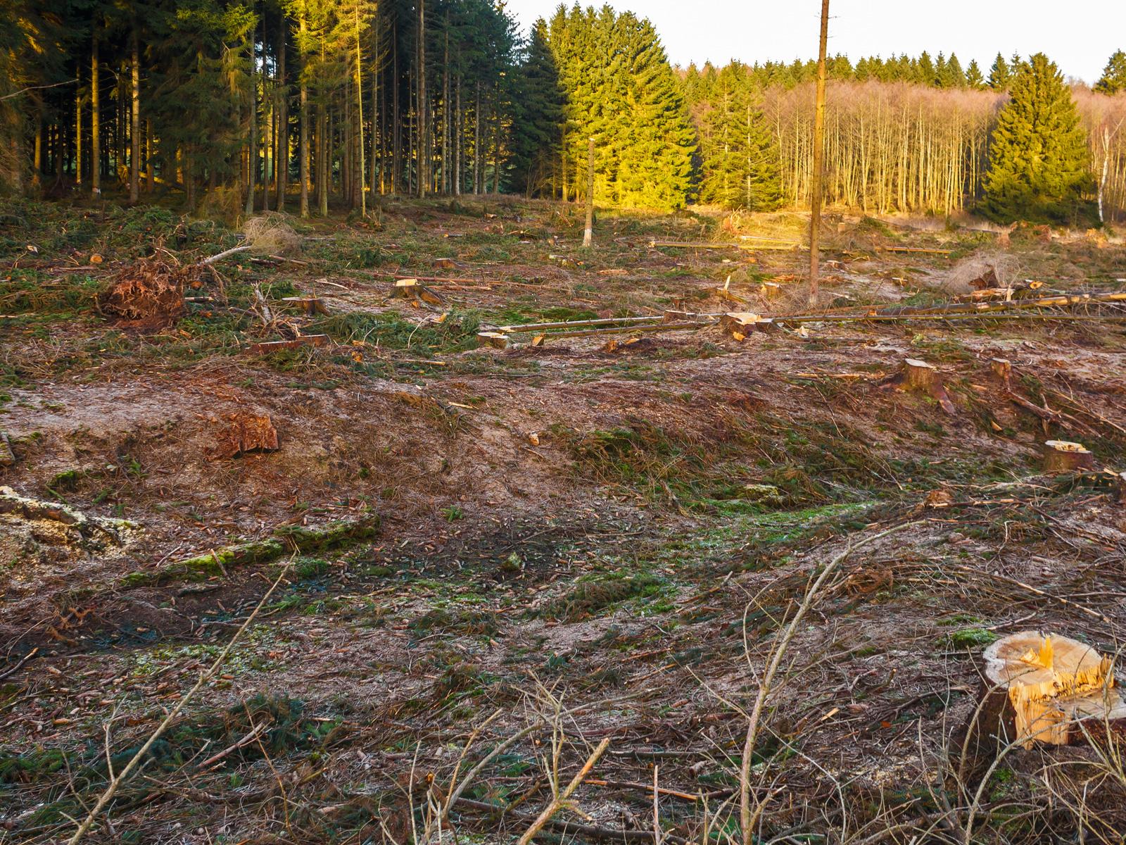 freigelegter Mineralboden ohne Humusschicht