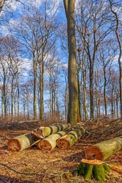 gesunde Bäume am Trampelpfad