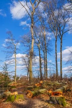 verpilzte Bäume am Trampelpfad