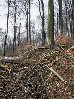 Berge toter Kronenäste auf Forstweg