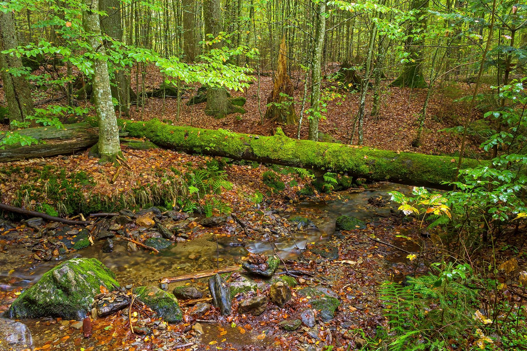 Mittelsteigbach im Urwaldrest Mittelsteighütte