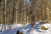 Urwaldrest Mittelsteighütte im Winter