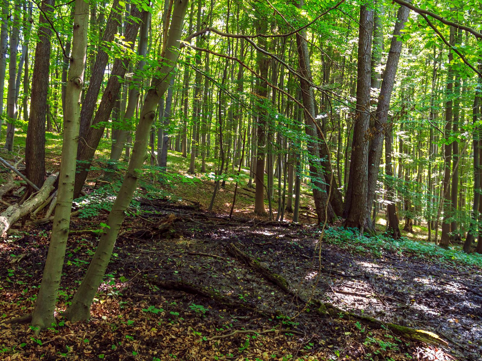 Quellmoor mit stark verrottetem Totholz