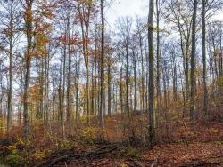 """""""devastiertes FFH-Schutzgebiet"""" (Gutachten)"""