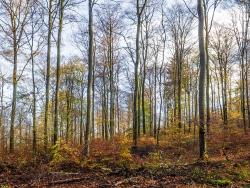 """""""unkontrolliert und ungebremst agierende Forstwirtschaft"""" (Gutachten)"""