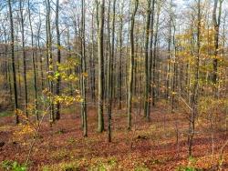 """""""Gebietsentwertung in fast allen hessichen FFH-Gebieten"""" (Gutachten)"""