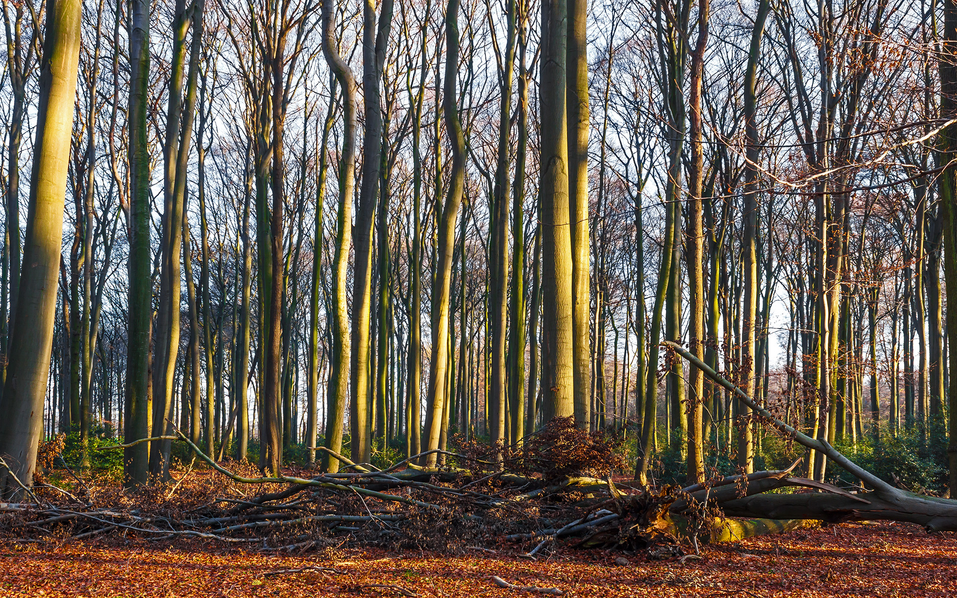 180 Jahre alter Flattergras-Buchenwald