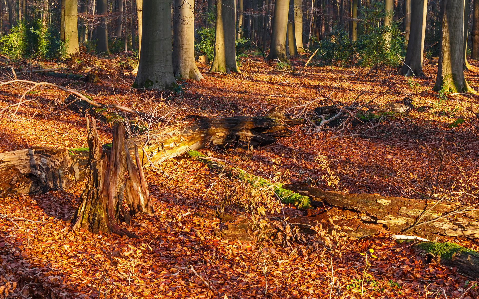 Totholzreichtum im unbewirtschaftetem Wald