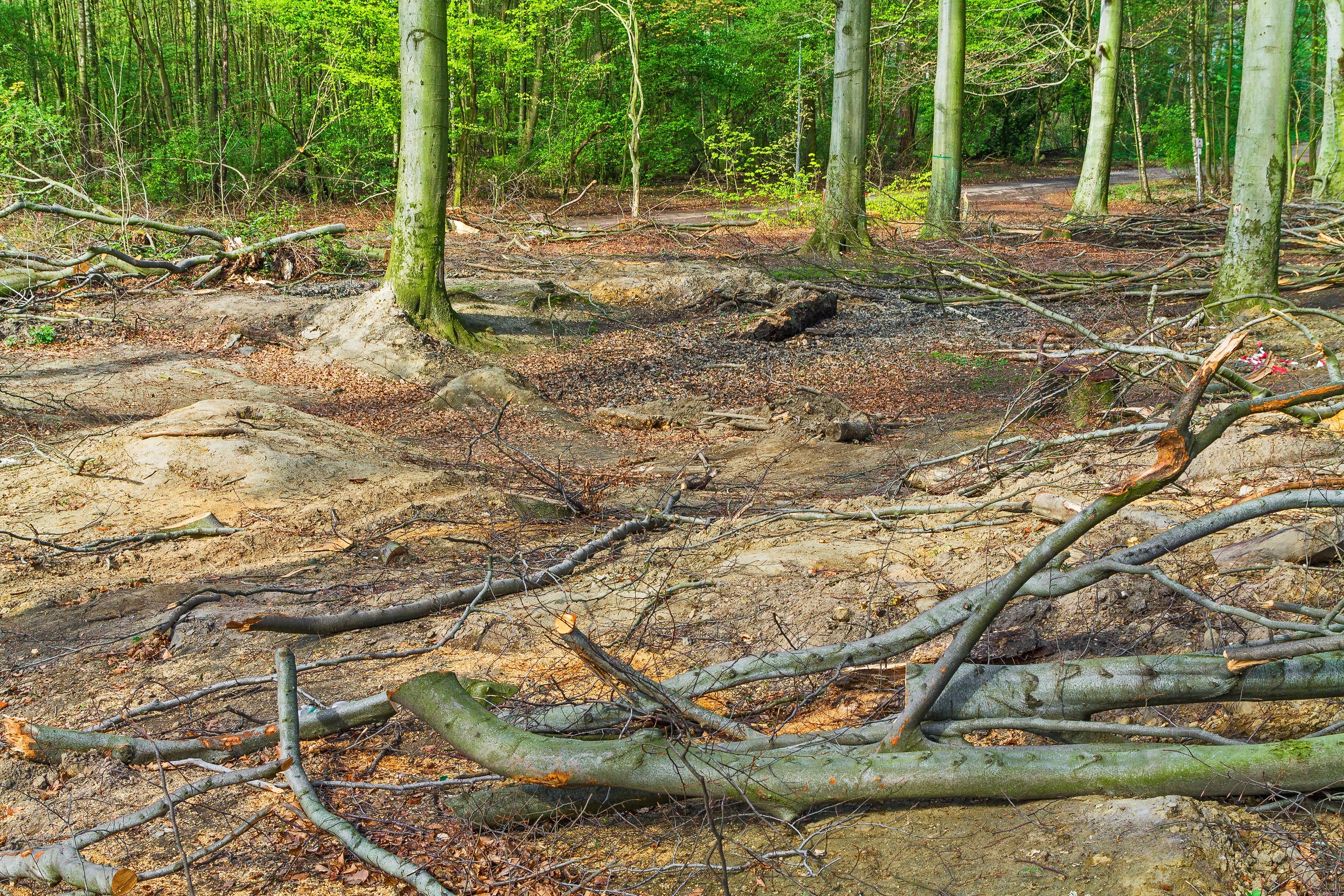 verdichteter Waldboden ohne Humusauflage