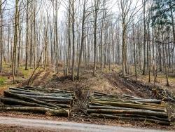 Holzpolter mit Rückegasse links und rechts