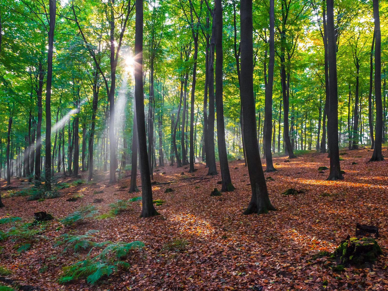 Totholzarmut im Försterwald