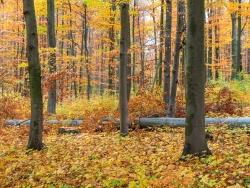 Holznutzung im ungleichaltrigen Plenterwald mit mehreren Baumschichten