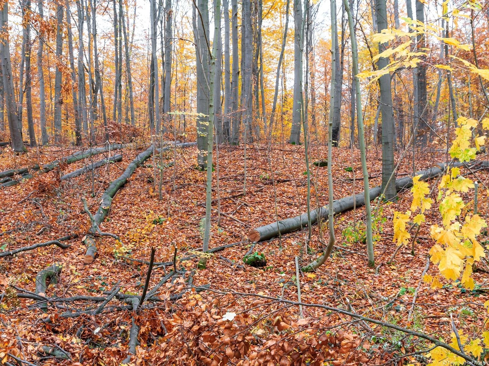 relativ hoher Holzvorrat mit 380 Vfm/ha