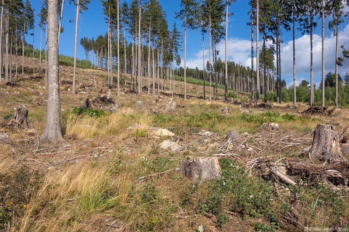 Salvage_Logging_NLP_Harz_04b