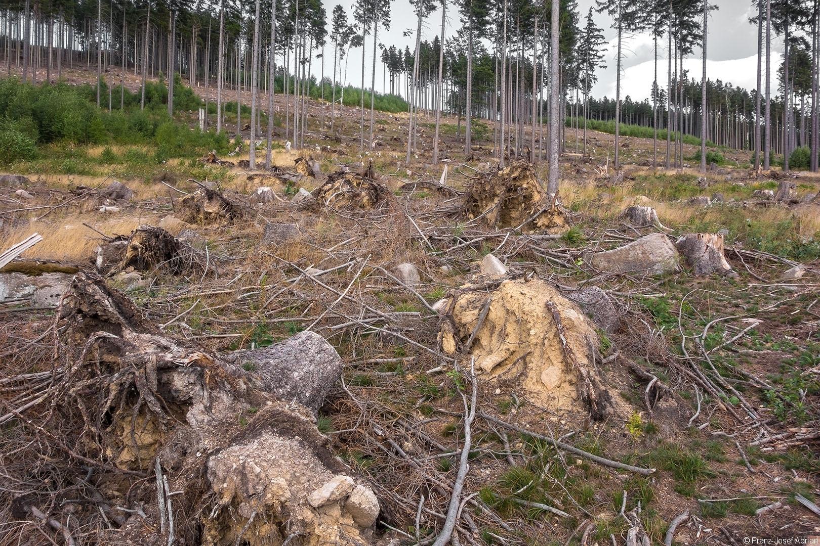 Salvage_Logging_NLP_Harz_05