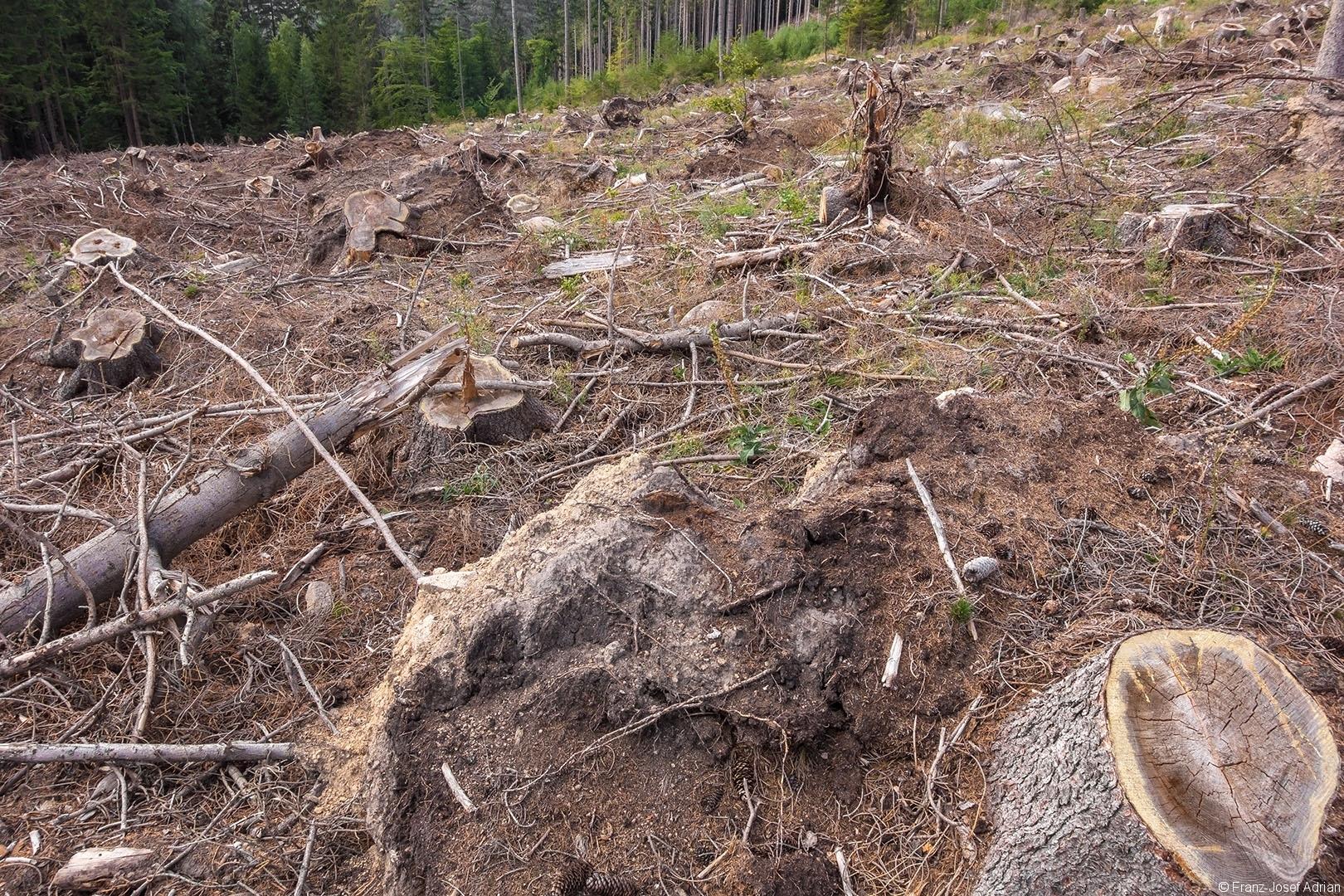 Salvage_Logging_NLP_Harz_06