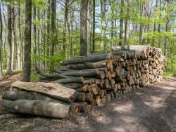 Buchenholzpolter