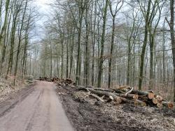 Holzpolter rechts und links des Forstwegs