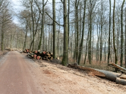 Holzpolter entlang des Wegs nach Bad Eilsen