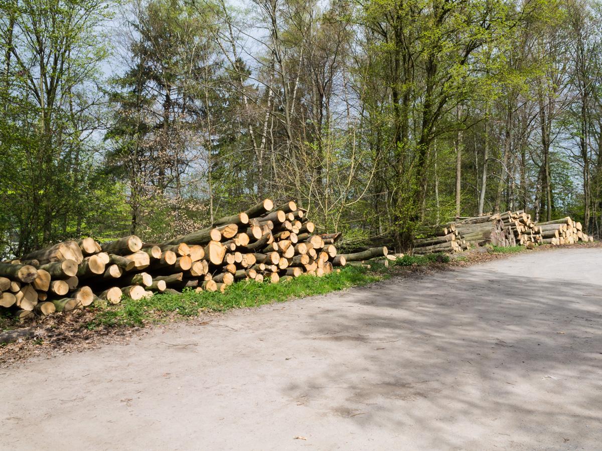Holzsammelplatz am Parkplatz Heissiwald