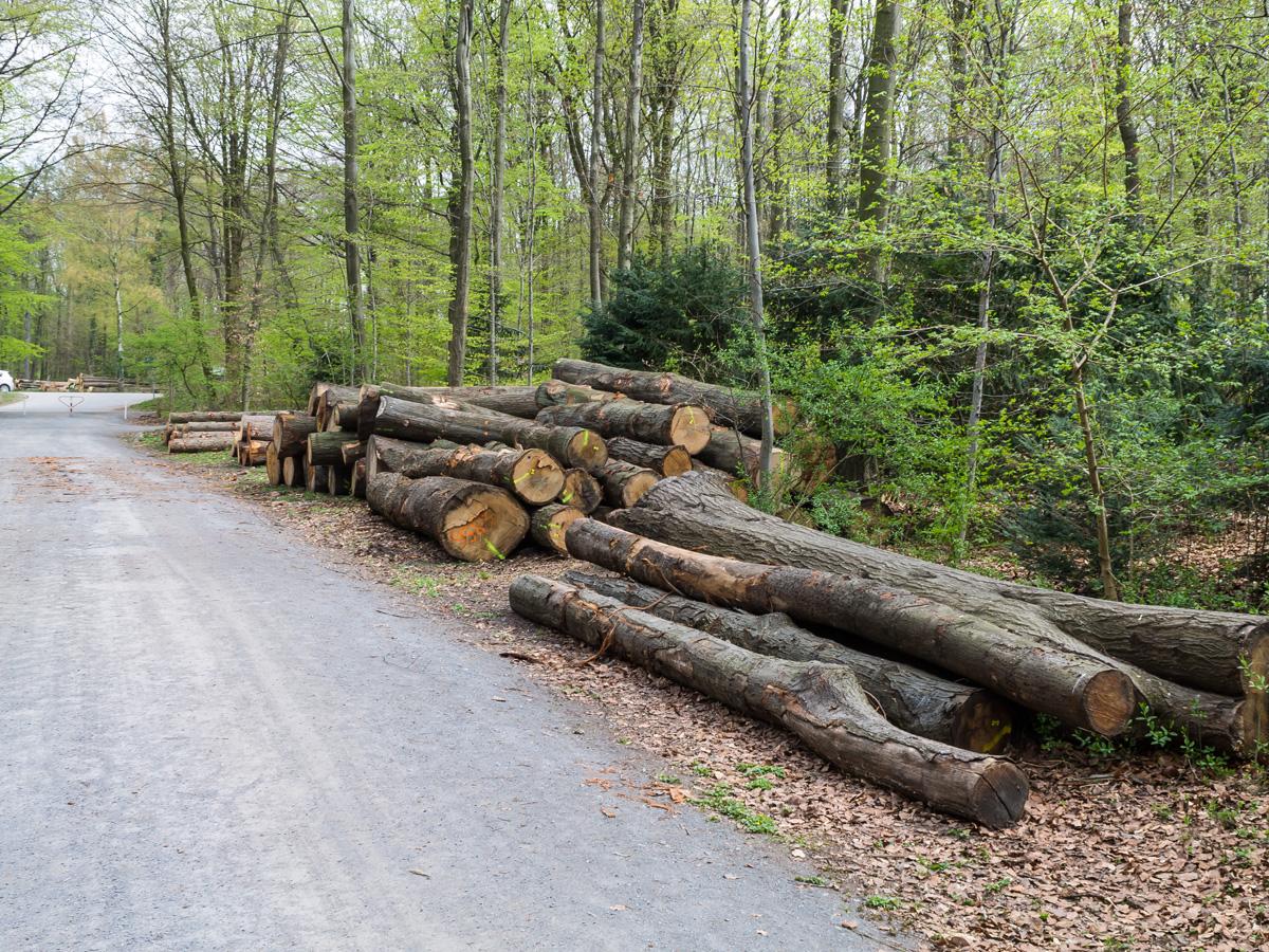Holzpolter am Forstweg im Heissiwald