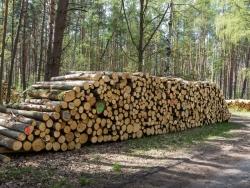 Holzpolter im NSG Kienhorst