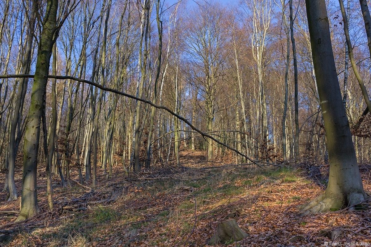 breite Rückegasse durch Buchenstangenholz mit wenigen Überhältern rechts am Rückegassenrand