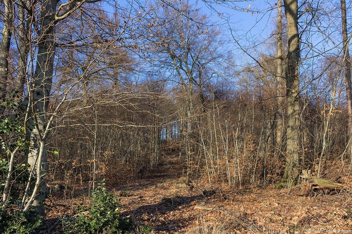 breite Rückegasse durch Buchenstangenholz mit wenigen Überhältern