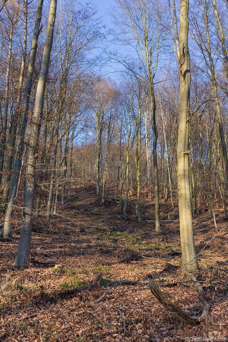 breite Rückegasse durch dünnes Baumholz mit wenigen Überhältern im Hintergrund