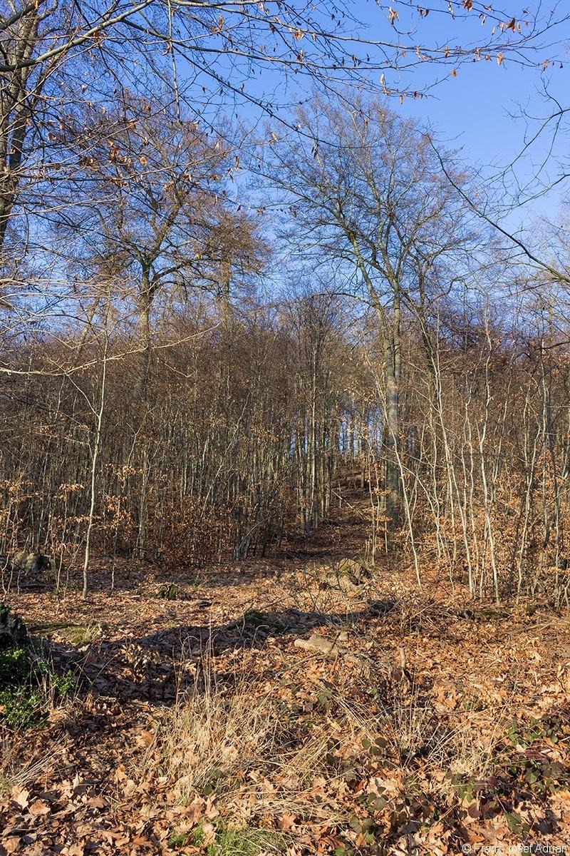 breite Rückegasse durch einen zweischichtig aufgebauten Schirmschlag-Wald: einzelne Überhälter inmitten von dünnem Baum- bzw. Stangenholz