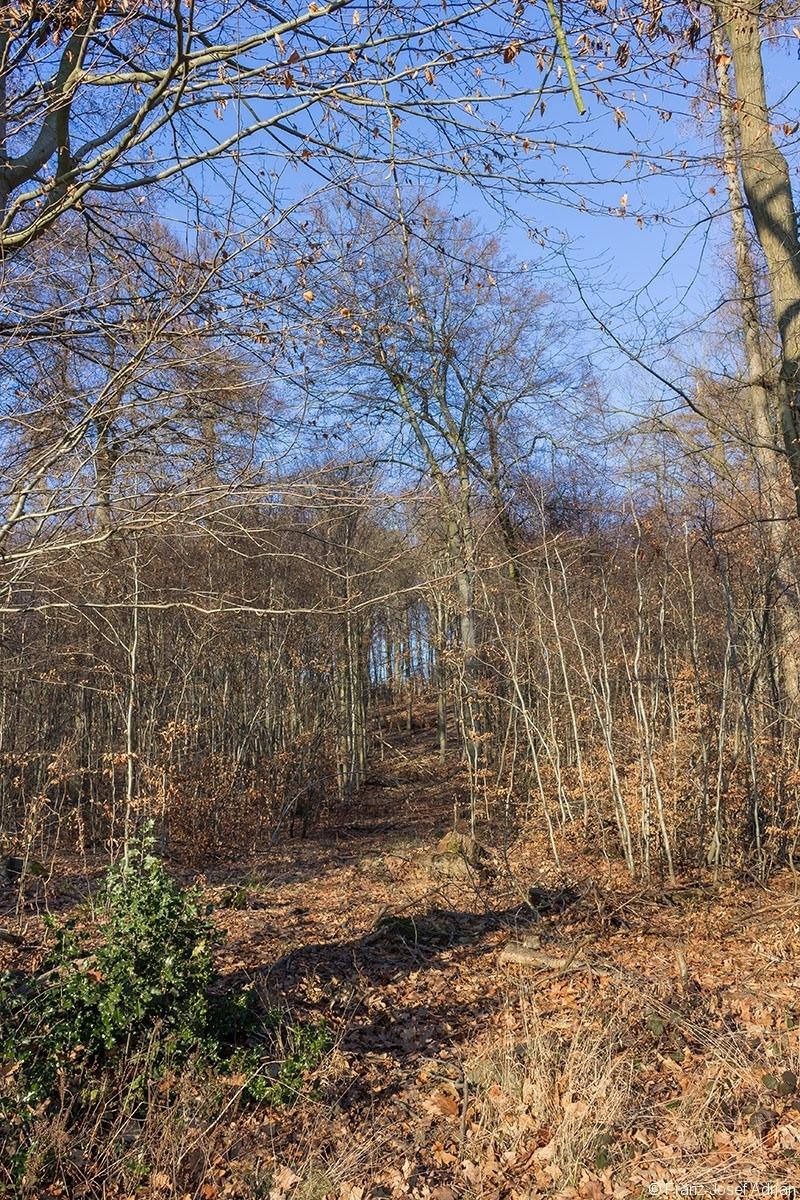 Überhälter im Stangenholz links und rechts der breiten Rückegasse
