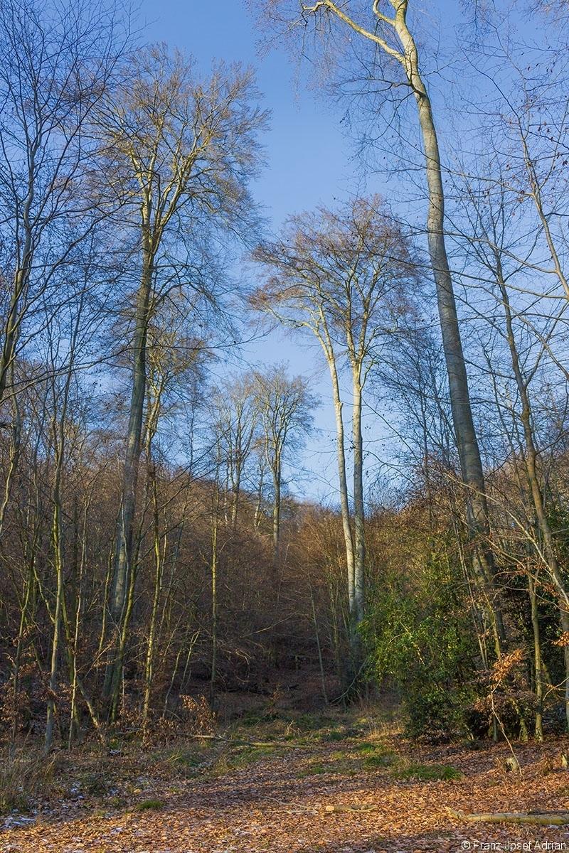 vereinzelte Überhälter im dünnen Baum- und Stangenholz