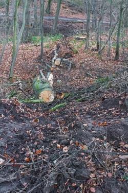 Baumfällung ohne wirtschaftlichen Sinn