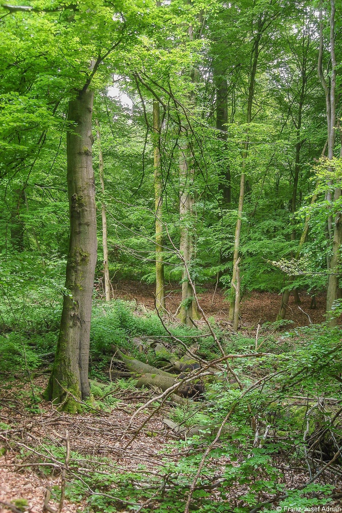 Eppelborn_Wirtschaftswald