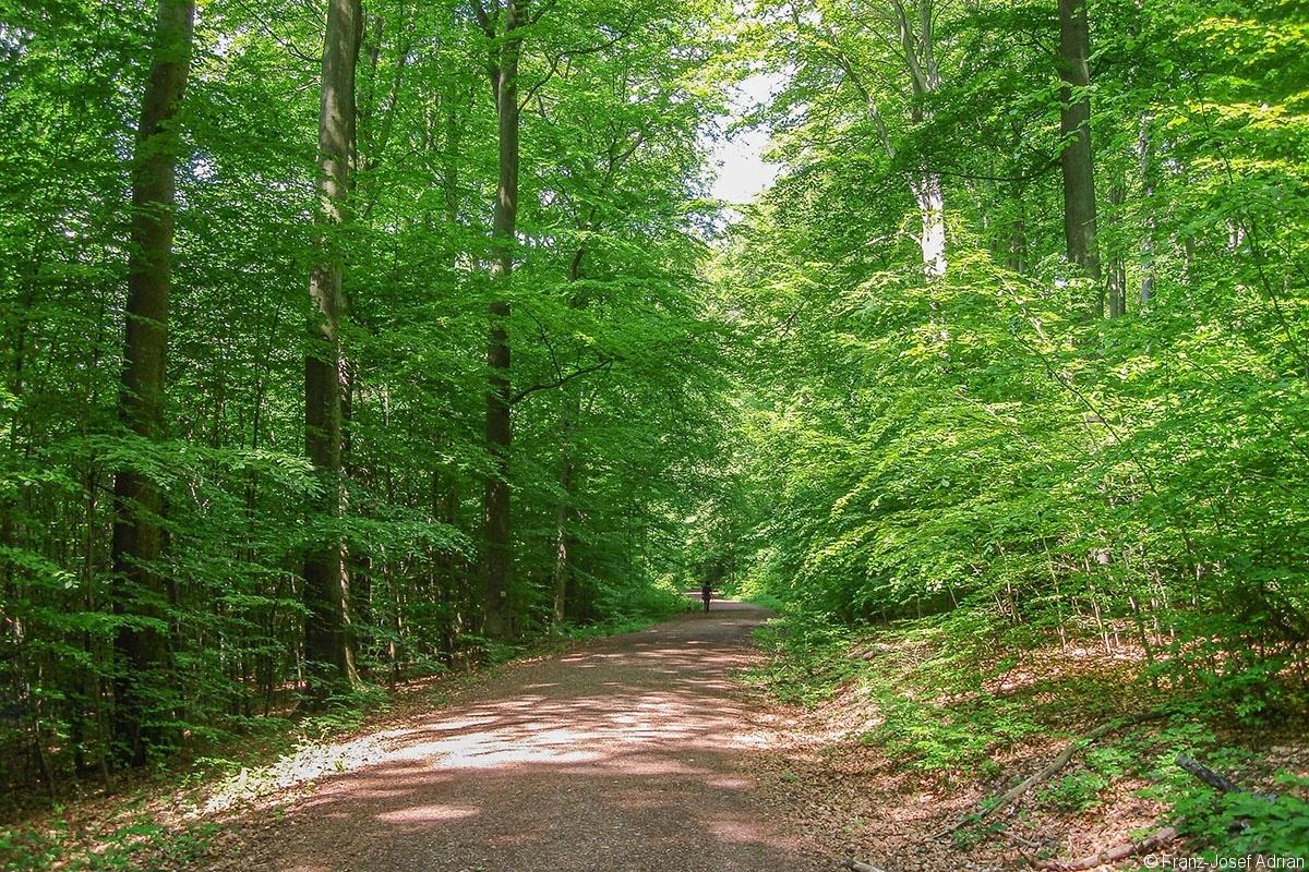 Erholungswald