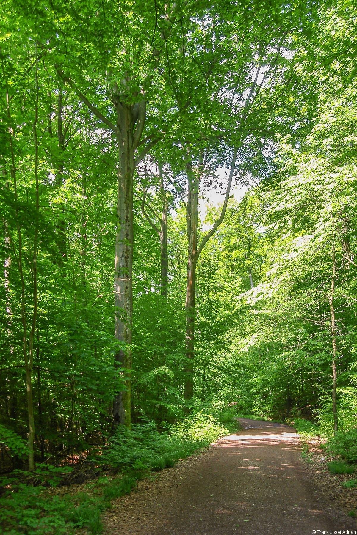 Erholungswald_2