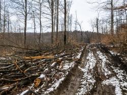 Geschädigter Forstweg mit tiefen Bodengleisen