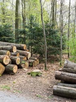 Gefällter Randbaum zwischen 2 Holzpoltern