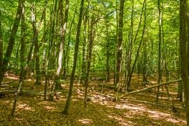 totholzreiches Totalreservat