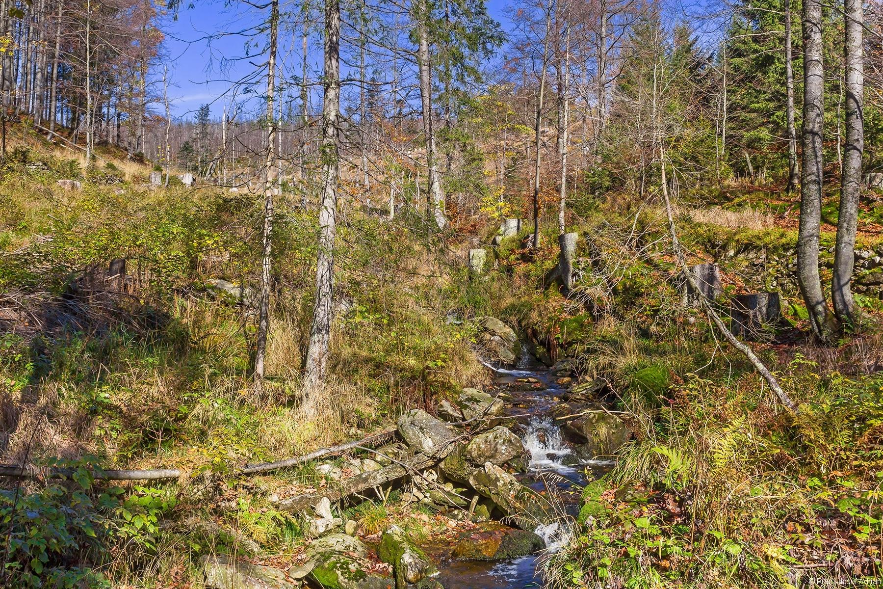 Brücke des Goldsteigs über den Rindelbach