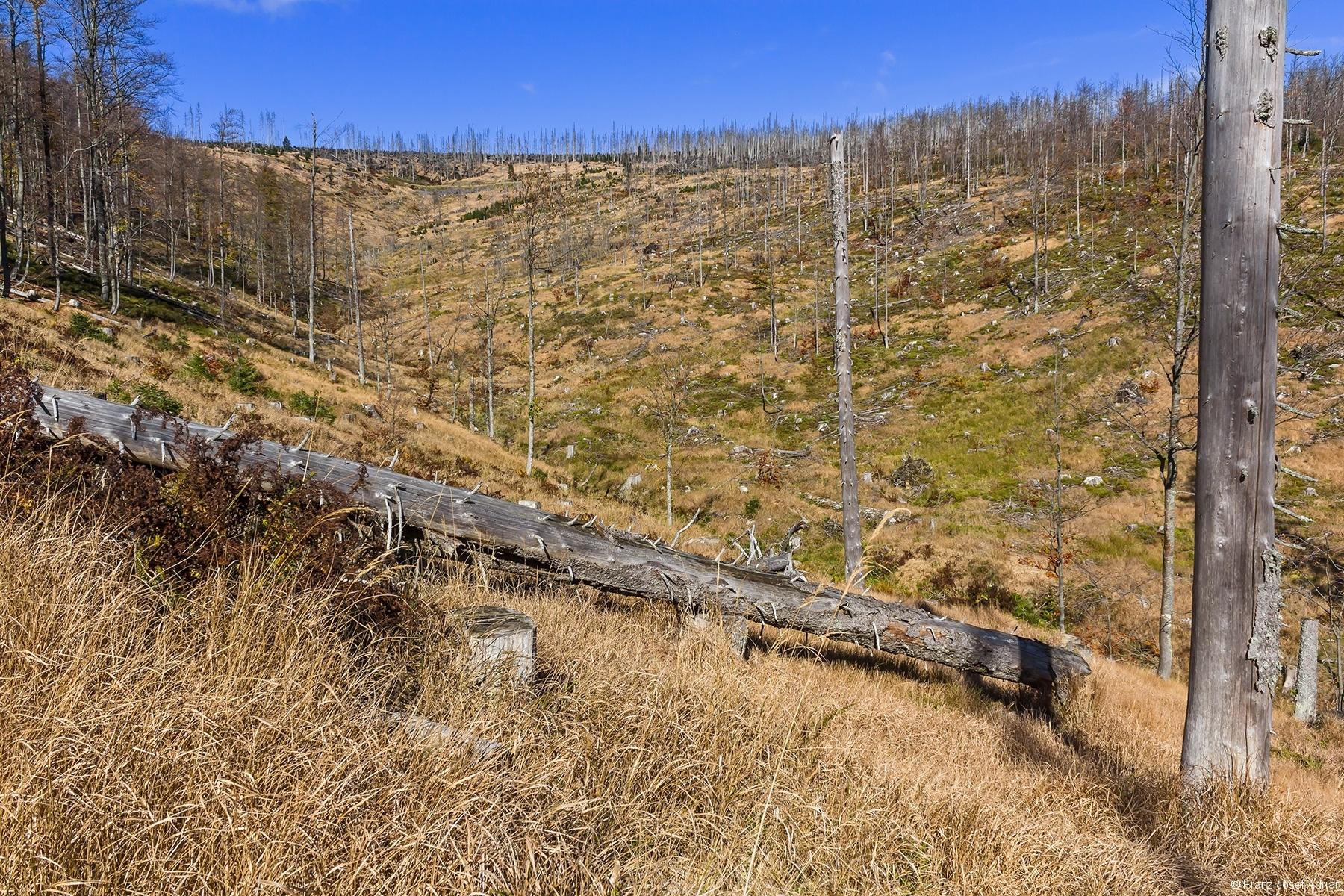 Riesenkahlschlag am Rindelloch