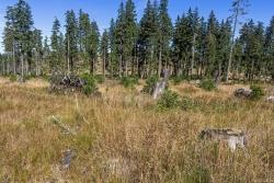 Reste des Hochlagenfichtenwalds, die der nächste Sturm umwerfen wird