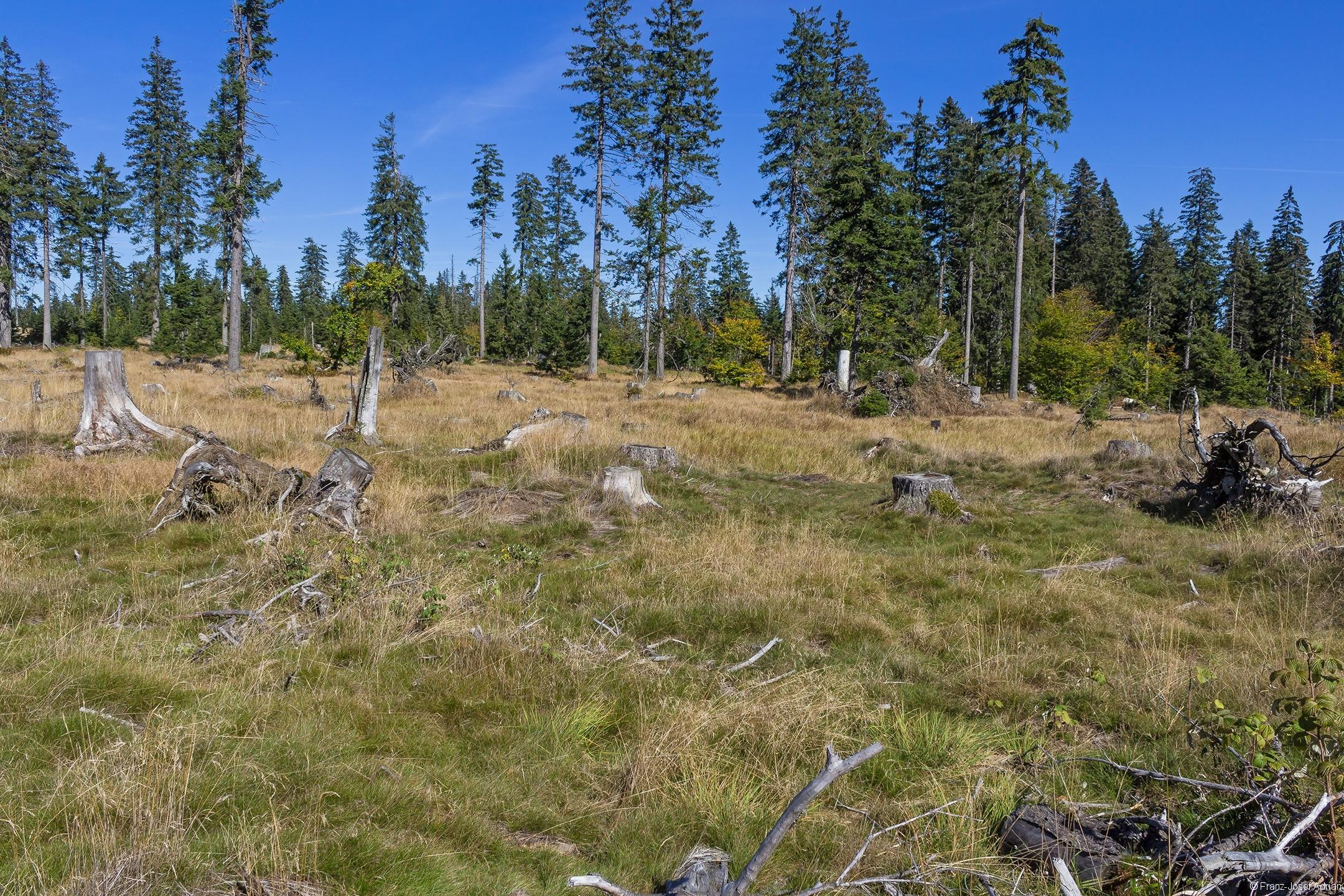 Grassteppe mit Baumstubben