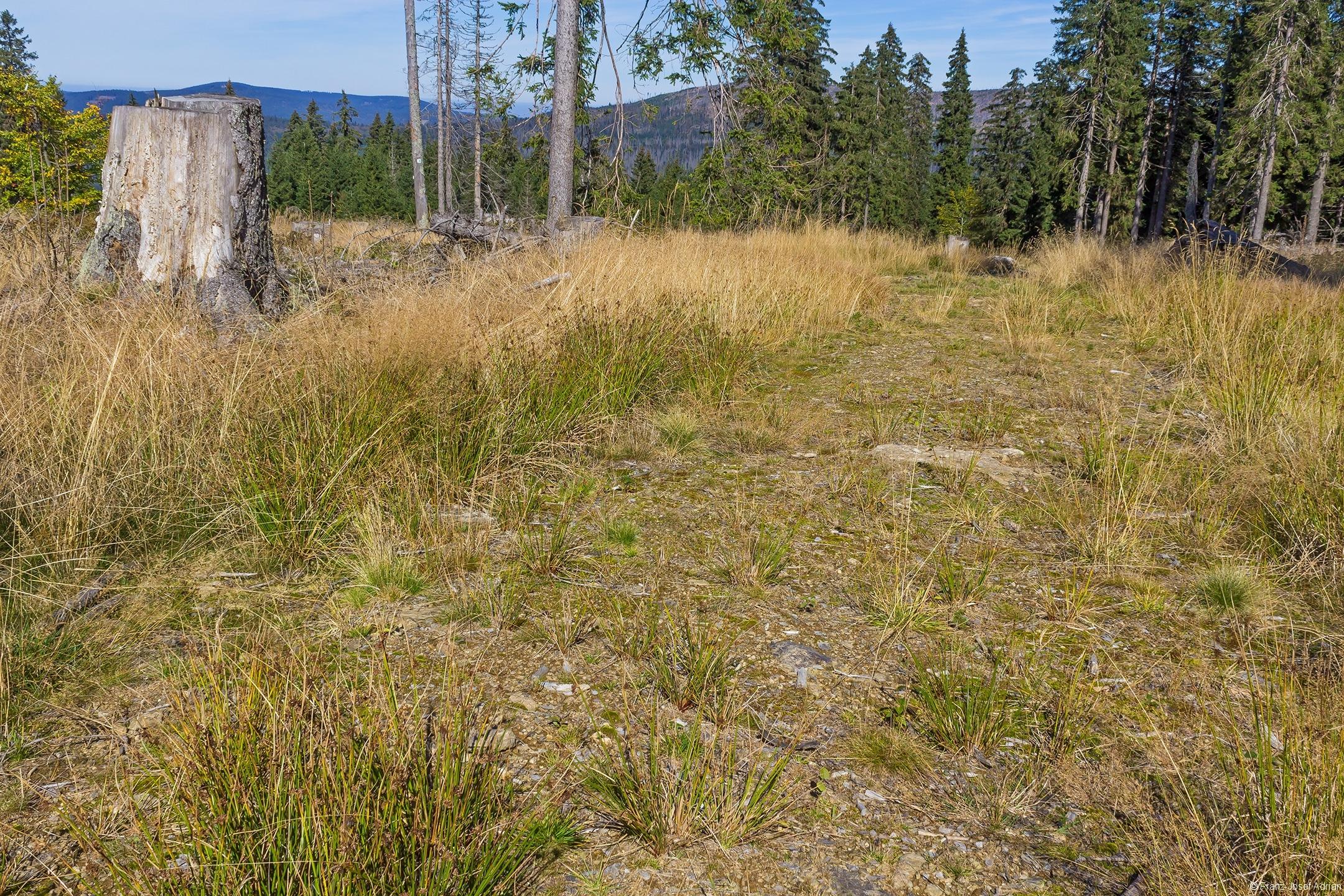 Nicht einmal Gras wächst auf den Rückegassen.