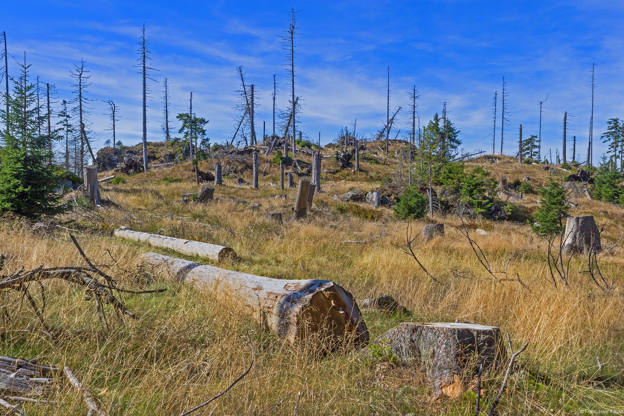 zwei handendrindete und liegen gelassene Baumstämme: Alibi-Totholz