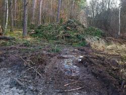 verwundeter Waldboden vor Reisighaufen am Ende der Rückegasse A